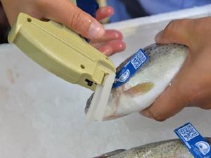 Mavi Karekod Projesi ile balıklar takip edilecek