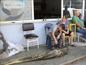 İki  metrelik yayın balığı restorana satıldı
