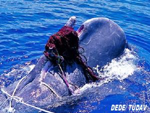 Akdeniz'de hedef dışı avcılığı azaltmak için el ele verildi