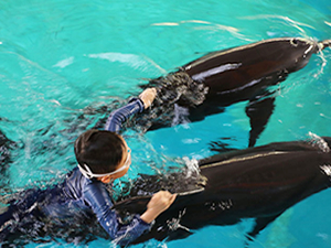Endonezya'da otizmli çocuklar yunuslarla yüzerek terapi görüyor