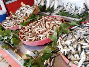 Egeli balıkçılar, sezona ümitli başladı