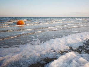 Aral Gölü'nde doğal hayat yeniden canlanıyor