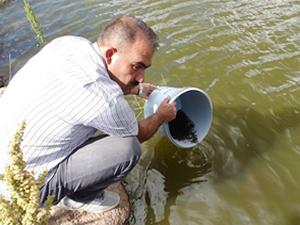Göletlere 110 bin yavru balık bırakıldı