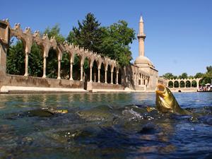 Şanlıurfa'da balıklar için havalandırma sistemi kuruldu