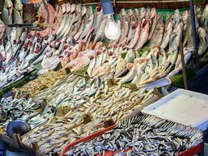 Bu yıl denizde balık bolluğu olacak