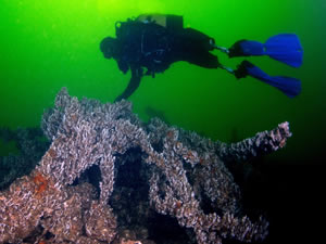 Türkiye'nin su altı güzellikleri, dalışta ilk sıralarda