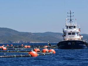Bakanlıktan Mandalya Körfezi'ndeki balık çiftlikleriyle ilgili açıklama