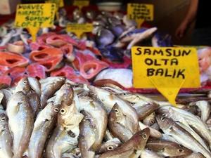 Sezonun ilk olta balıkları Samsun'a geldi