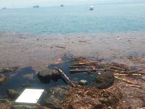 Sağanak yağış Eskihisar Sahili'ni kirletti