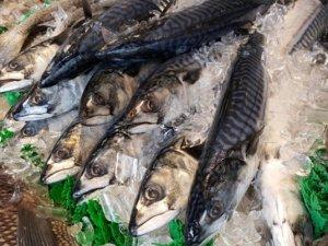 Balık sektörü endüstri 4.0 ile gelişiyor