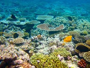 Okyanus asitlenmesi, deniz yaşamını olumsuz etkiliyor