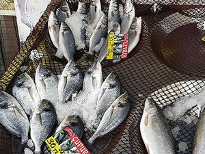 Sıcak hava balık fiyatlarını artırdı