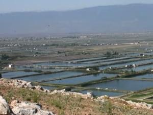 Suriye'deki çiftliklerde balık üretimi azaldı
