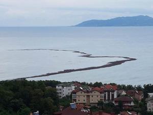 Ordu'yu sel vurdu, denizde fındık adası oluştu