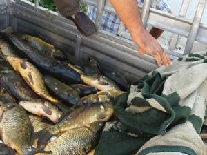 Kaçak balık avlayan kişiye 658 TL para cezası kesildi