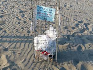 Antalya'da caretta caretta yuvalarına çöp bırakıyorlar