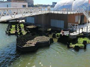 Deniz ve nehirlerdeki çöplerden geri dönüşüm parkı yaptılar