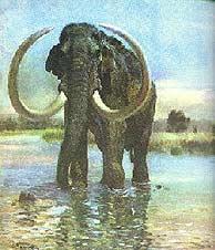 10 bin yıllık mamut bulundu
