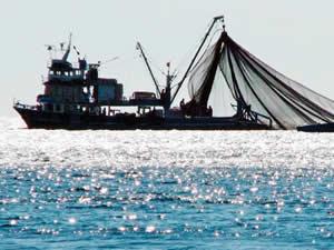 Trabzon'da balıkçılar yeni sezondan umutlu