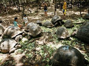 Dev kaplumbağaların yuvası 'Changuu Adası'