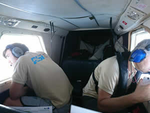 Akdeniz'deki balina ve yunuslar uçaktan sayıldı