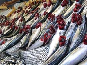 Karadeniz'e açılan balıkçılar palamut avladı