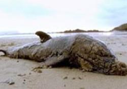 Kıyıya vuran balinaya ilginç infaz
