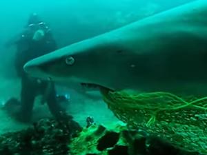 Köpek balığını kurtaran dalgıç ödüllendirildi