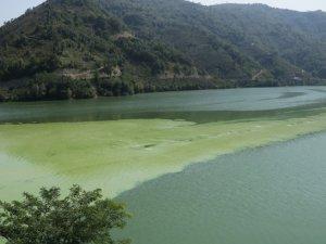 Suat Uğurlu Baraj Gölü'nde alg patlaması yaşandı