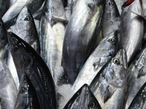 Çanakkale'de tezgahlar doldu, balık fiyatları düştü
