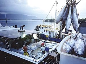 Türk balığı dünyada aranan balık haline geldi