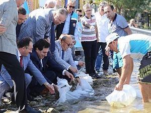 500 bin yavru sazan balığı İznik Gölü'ne bırakıldı
