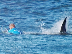 Avustralya'da 24 saatte iki köpek balığı saldırısı yaşandı