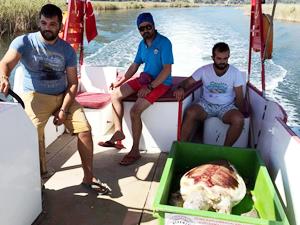 Dalyan Kanalı'nda caretta caretta bulundu