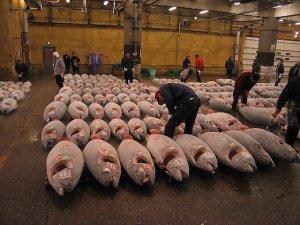 Tsukiji Balık Pazarı taşınıyor