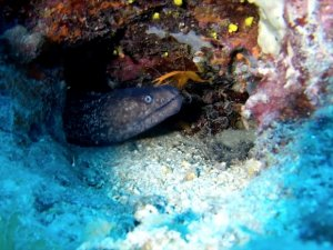 İnönü Vapuru deniz canlılarının yuvası oldu