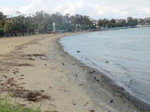 Yalova'da deniz çekilmesinin nedeni belli oldu