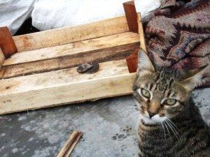 Kediler balık tezgahı önünde nöbet tutuyor