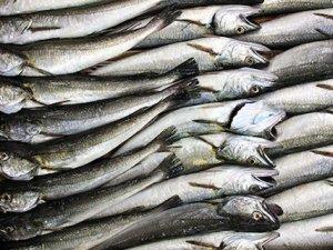 Kumkapı'da balık festivali düzenlenecek