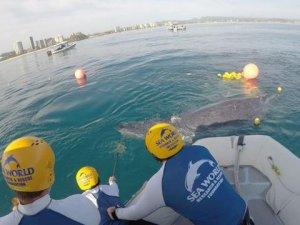 Ağa takılan balina yavrusu, operasyonla kurtarıldı