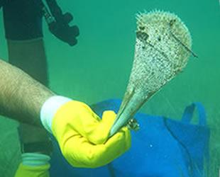 Çanakkale'de deniz canlıları koruma altına alındı