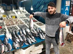 Denizdeki balık bereketi sofraya yansıyor