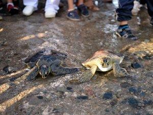 Mersin'de tedavi edilen 'caretta caretta'lar suyla buluştu