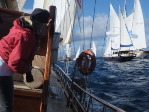 Yelken yarışlarına yunus balıkları damga vurdu