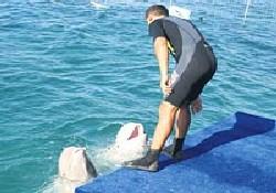 Sevimli balinalar tedavi görüyor