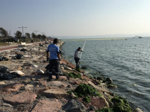 İzmir Körfezi'ndeki deniz marulları temizlendi