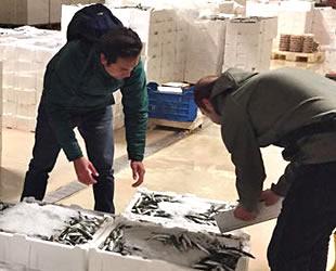 İstanbul'da 22 ton balığa el konuldu