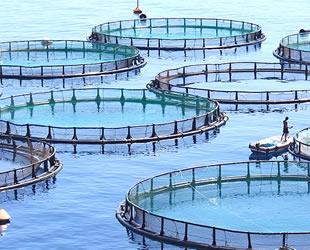 Mersinliler, 'balık çiftliği' istemiyor