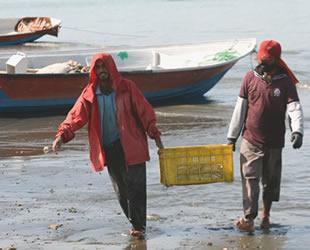 İranlı balıkçılar, ABD yaptırımlarından değil; Çinli balık firmalarından korkuyor