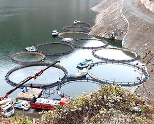 Torul'dan yılda bin 500 ton balık ihraç ediliyor